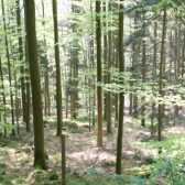 Як добути їжу в лісі