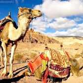 Як використовувати верблюда для захисту від піщаної бурі
