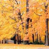 Як написати твір про осінь
