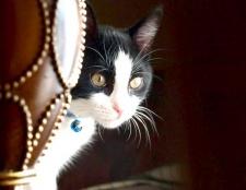 Що робити, якщо кішка просить кота