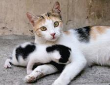Що робити, якщо кішка сама не може народити