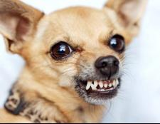 Що робити, якщо покусала собака