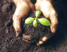 Для чого потрібна рослинам грунт