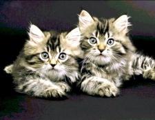 Як лікувати епілепсію у кішок