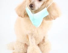 Як лікувати рану у собаки