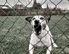 Як побороти страх собаки