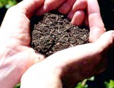 Як підготувати грунт до посіву