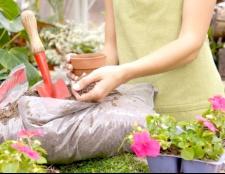 Як удобрювати кімнатні рослини