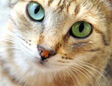 Як годувати і доглядати за кішками