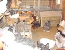 Як утеплити курник
