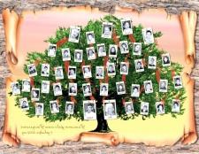 Як дізнатися коріння свого прізвища