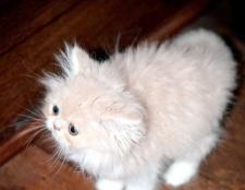Як виховати кошеня ласкавим