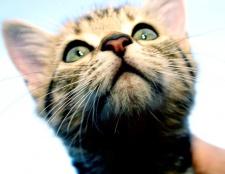 Як вибрати ім'я для кішки
