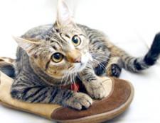 Як прибрати запах котячої сечі з взуття