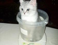 Як зважити кота