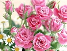 Як замовити квіти в інтернеті