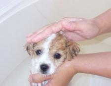 Як помити цуценя