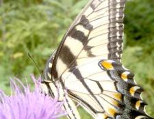 Як зберегти красу природи