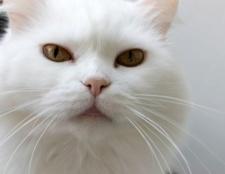 Як дати ім'я коту