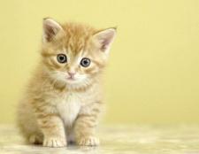Як позбутися від бліх у кошеняти