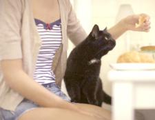 Як годувати домашніх кішок