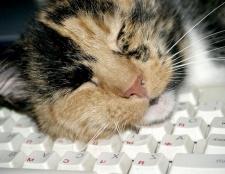 Чому кішки багато сплять