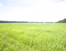 Як оцінити вартість земельної ділянки