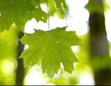 Що таке фотосинтез