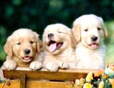 Як придумати кличку собаці