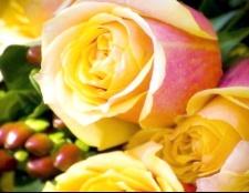 Як відпоїли троянди