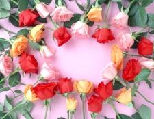 Як зберегти троянди надовго